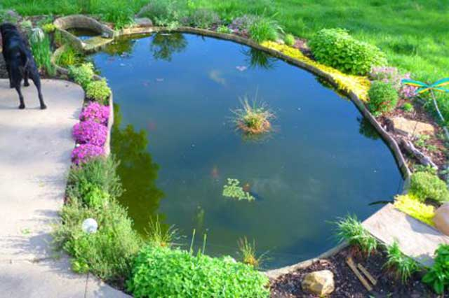 How to build a water garden - the finished pond