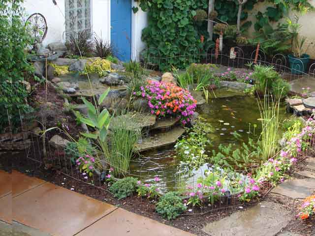 Finished water garden with pond plants
